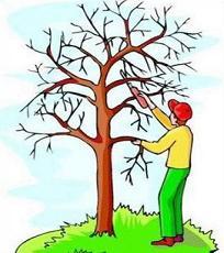 Fall 2020 Tree Trimming Program